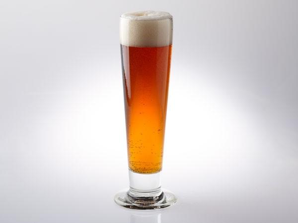 California Common beer in Pilsner glass