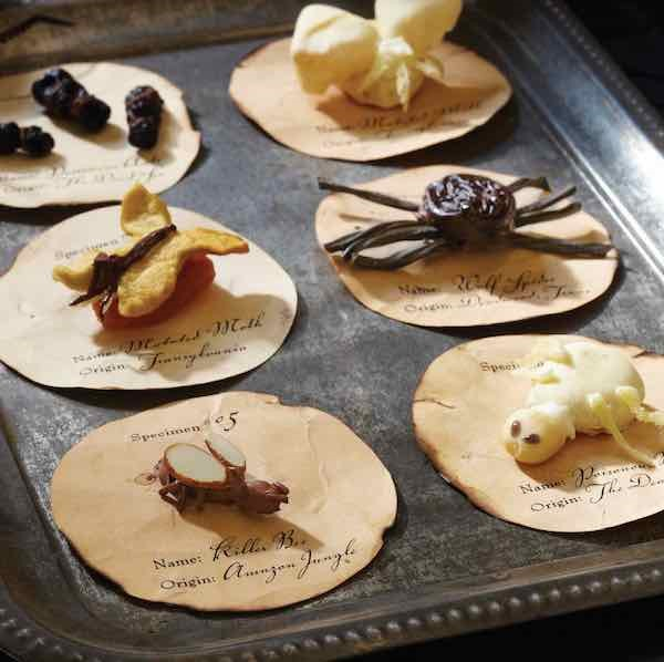 Edible Specimens made from Assorted Candies and Nuts