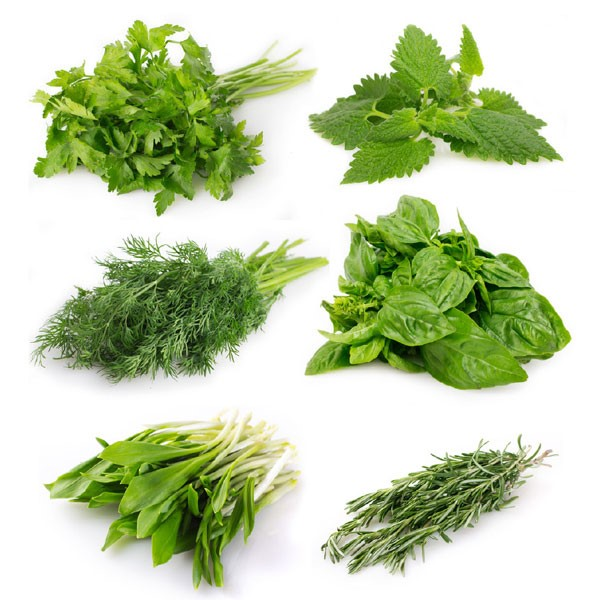 Fresh Herb Varieties