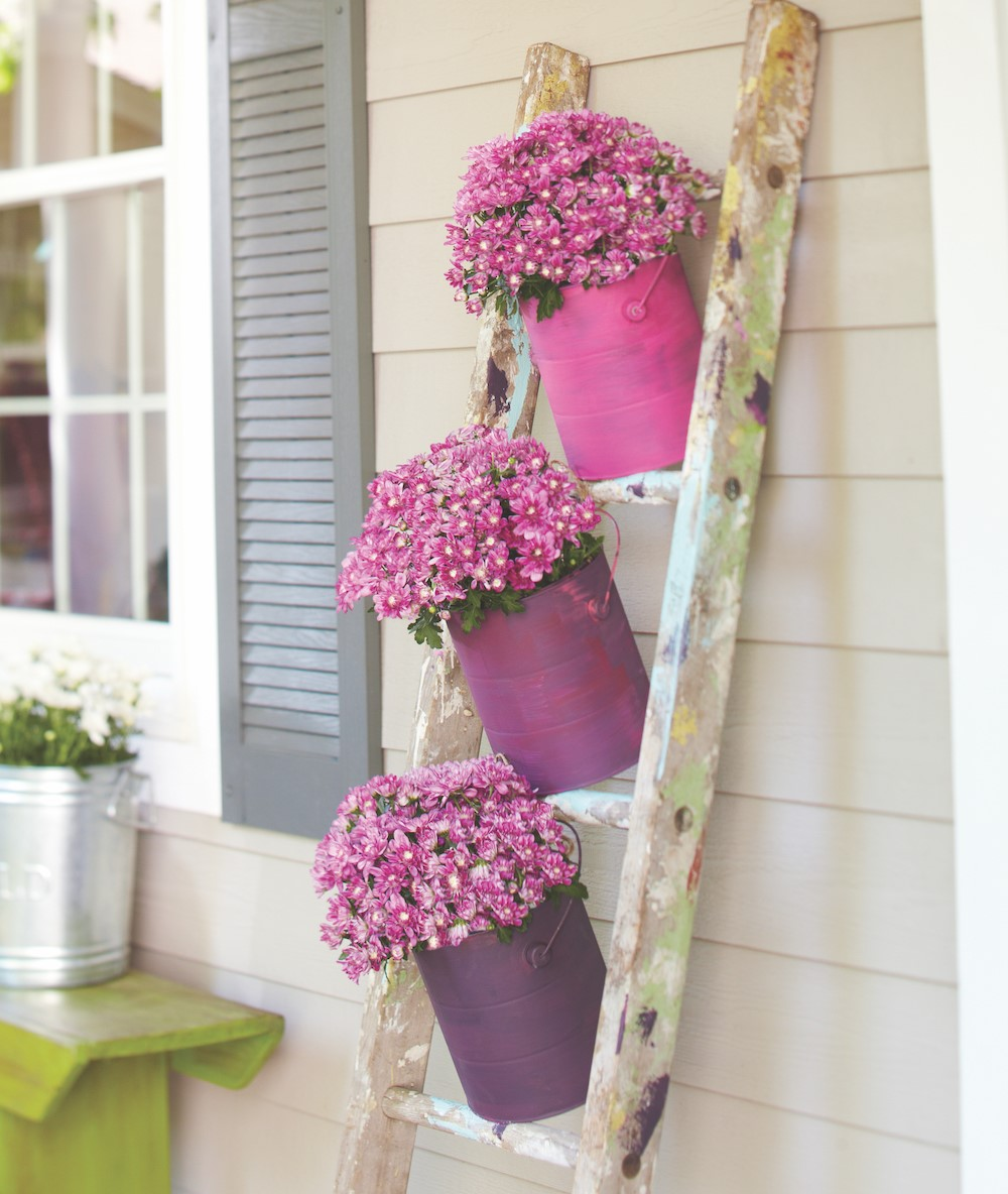 Pink mums in purple and pink bucket vases on a rustic ladder