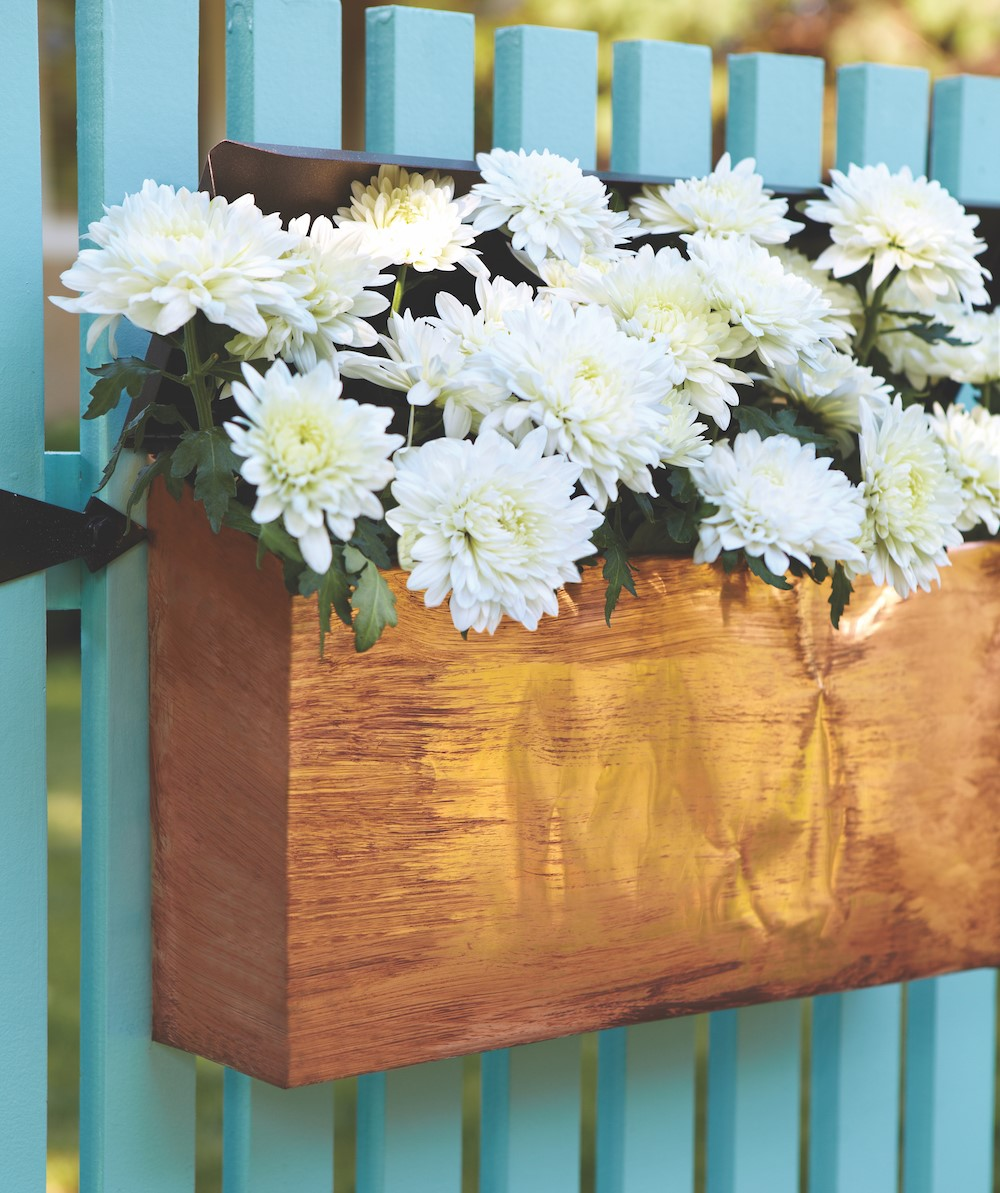 White mums in wooden box in front of blue fence