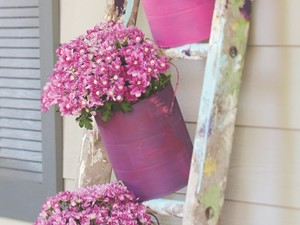 Paint old paint cans to use as decorative pots for displaying mums.