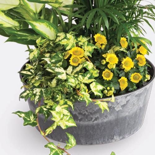 Florist's Choice Dish Garden