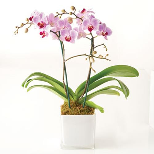 Elegance Orchid Collection in Ceramic & Glass
