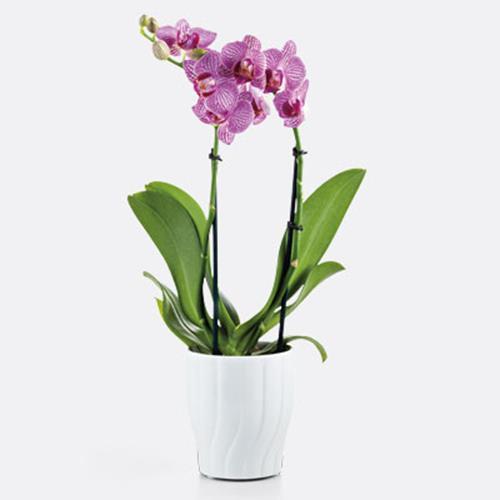 """3"""" Orchid in Alyssa Ceramic"""